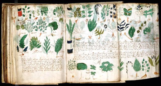 manuscrito_adictamente_blogspot-1 dans L'étrange manuscrit de Voynich.